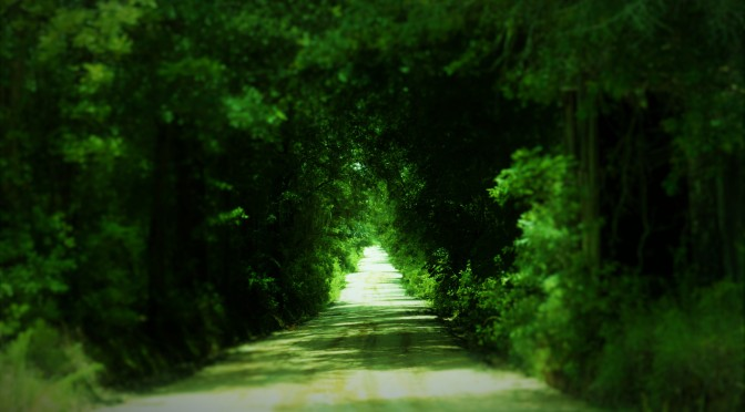 Walking the road less traveled